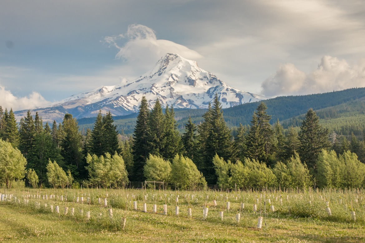 Grateful Vineyard is one of the best wineries in Hood River Oregon