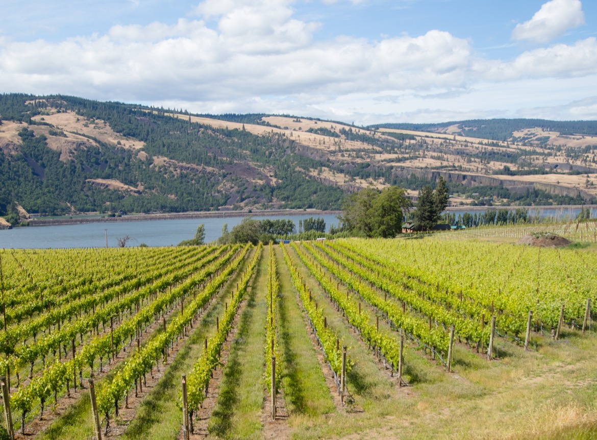 Garnier Vineyards in Mosier OR