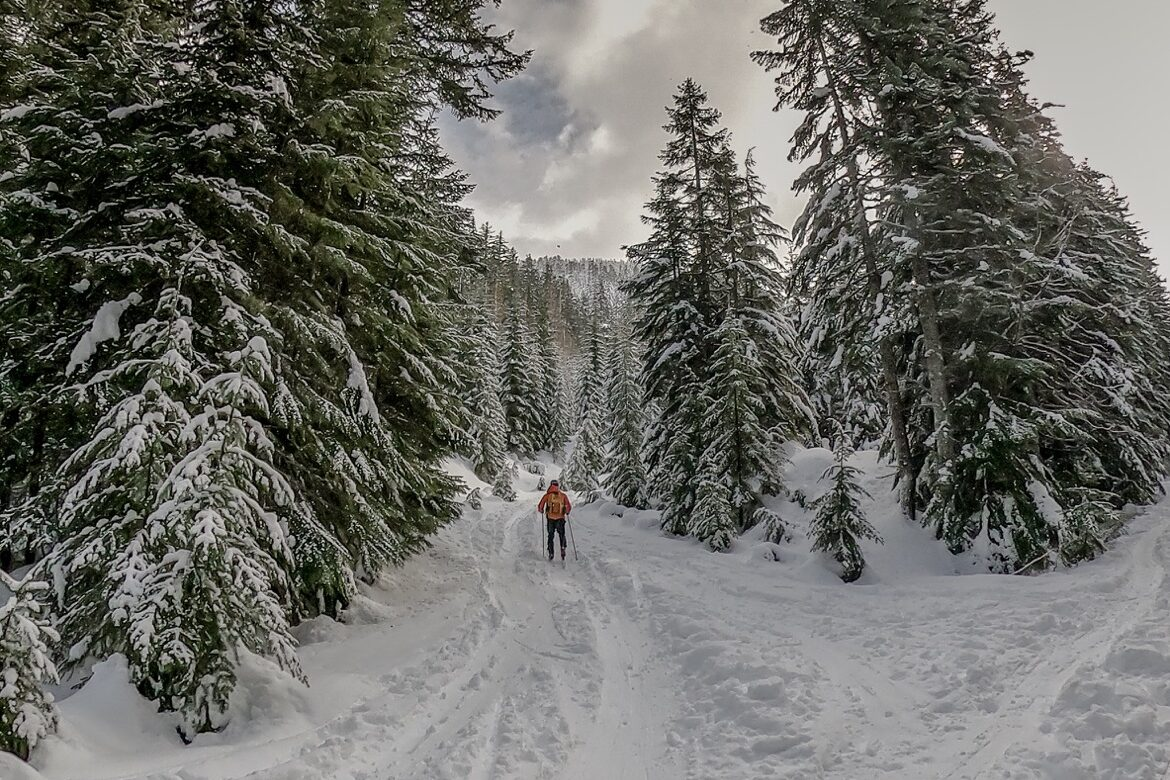 Cross country skiing Mt Hood at Pocket Creek in Oregon