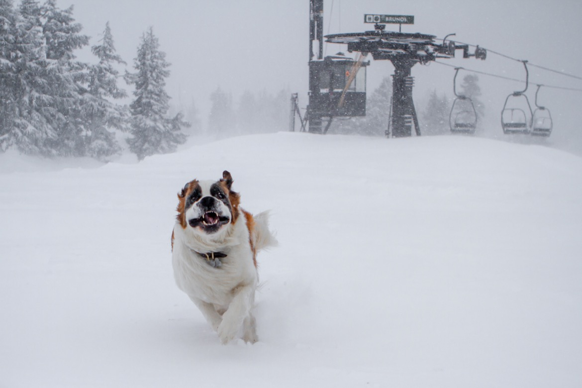 Bruno, one of the dogs at Timberline. Supplied.